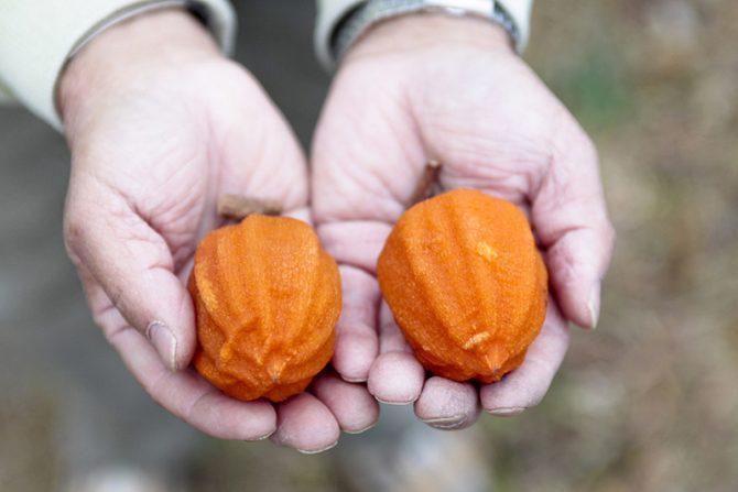 濃厚な甘さ、福島発祥のドライフルーツ「あんぽ柿」お酒にも合うオススメの食べ方をご紹介