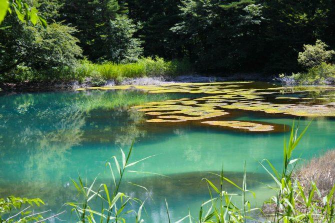 エメラルド、ターコイズ、コバルト… 神秘の湖沼「五色沼」をめぐる自然探勝路を歩いてみよう!