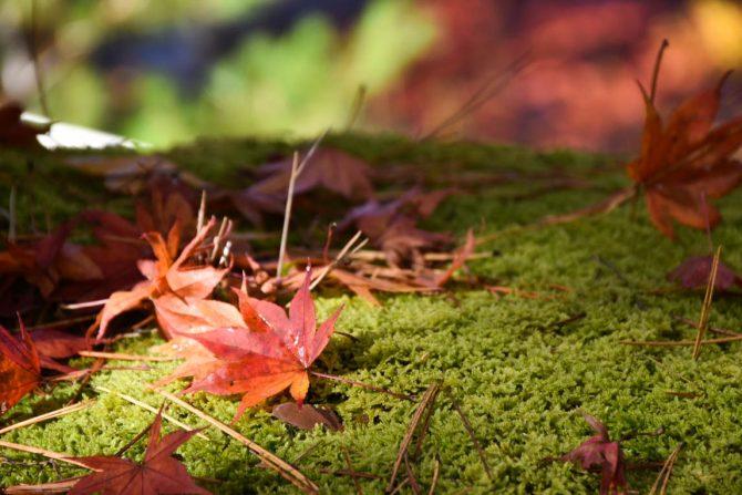 秋色みつけた!会津柳津〜喜多方周辺で楽しめる紅葉はしご旅