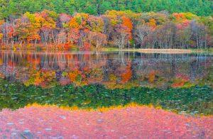 紅葉&常緑樹のコントラスト