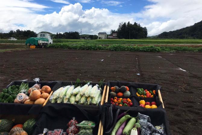 """旬な採れたて野菜で """"畑の朝食レストラン"""" が楽しめる「Food Camp」で農産物の収穫体験"""