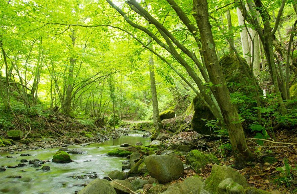達沢不動滝の川