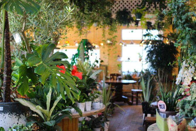 200品種以上の植物が並ぶ、まるで植物園のようなカフェ「Ca-Ga」