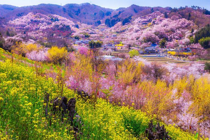 【2019年版】花より団子?文化も食も味わいつくす 春の福島市観光