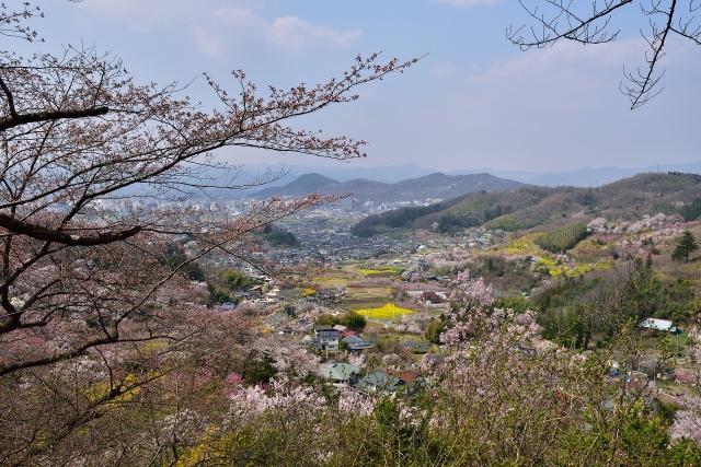花見山から見下ろす福島盆地