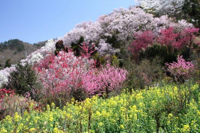 フォトジェニックな景色に感動! 福島市の自然美を感じる旅