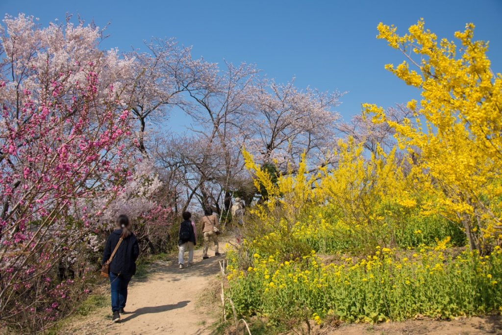 花見山の歩道