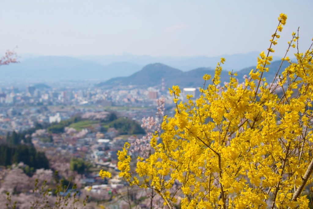 花見山の頂上