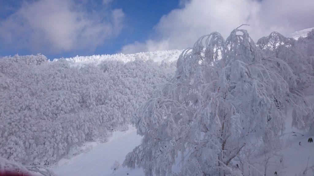 箕輪スキー場・山頂付近の樹氷